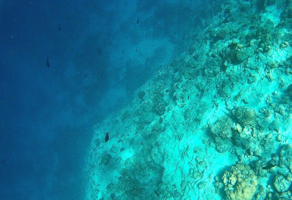 dharavandhoo-house-reef