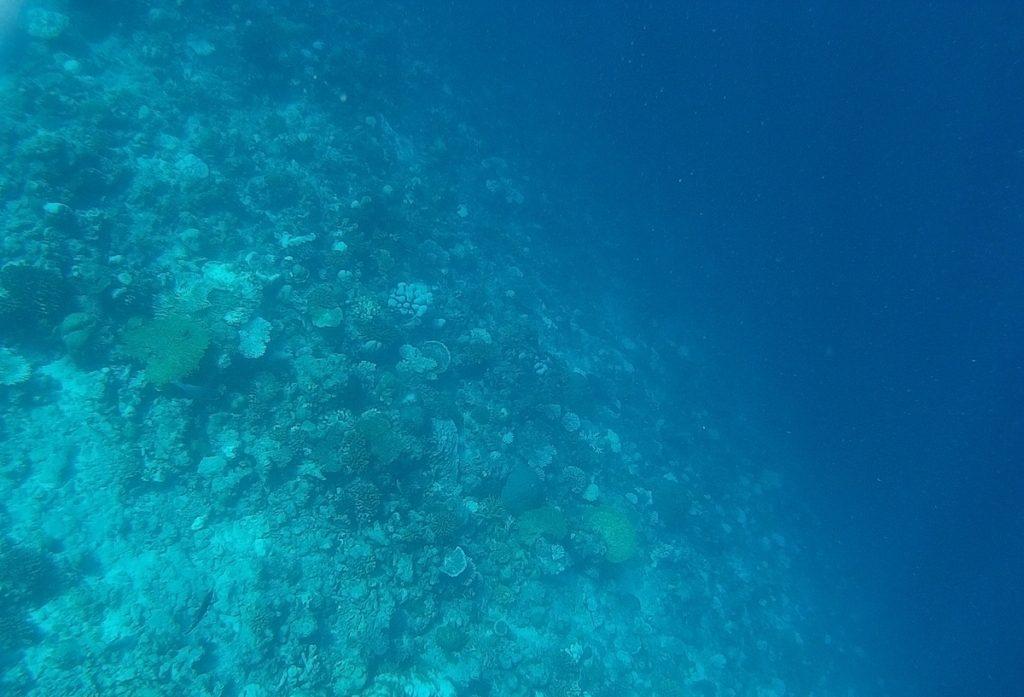 dhigurah-snorkeling