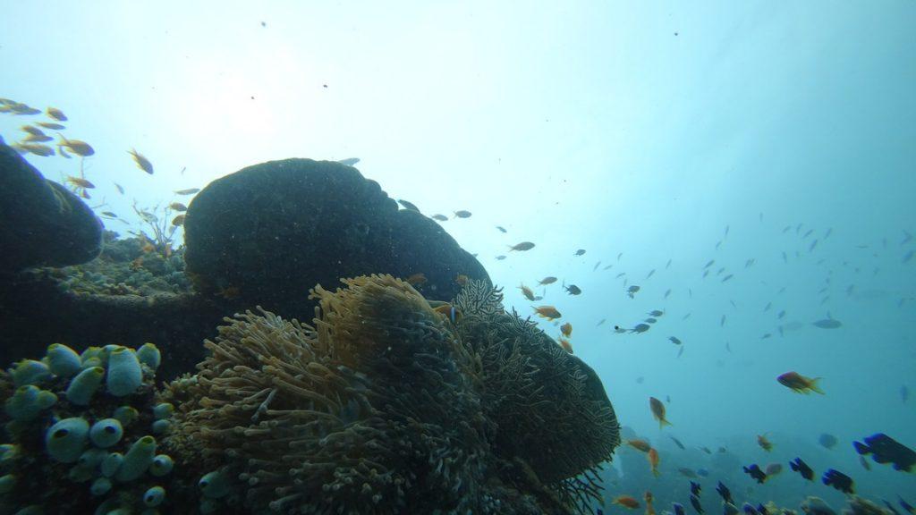 diving-in-maldives-soft-corals-1