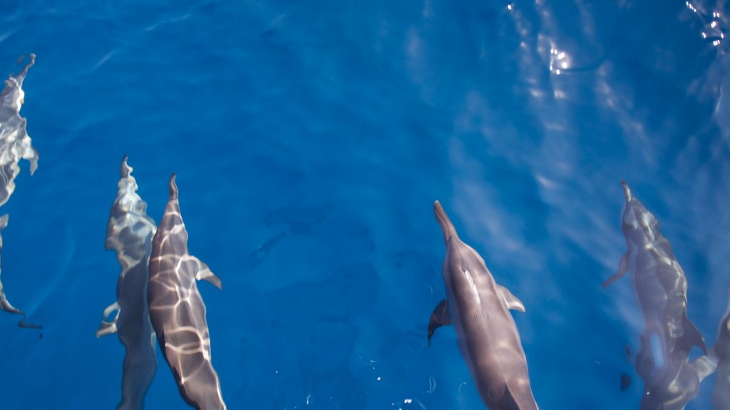 guide-to-budget-maldives-dolphins
