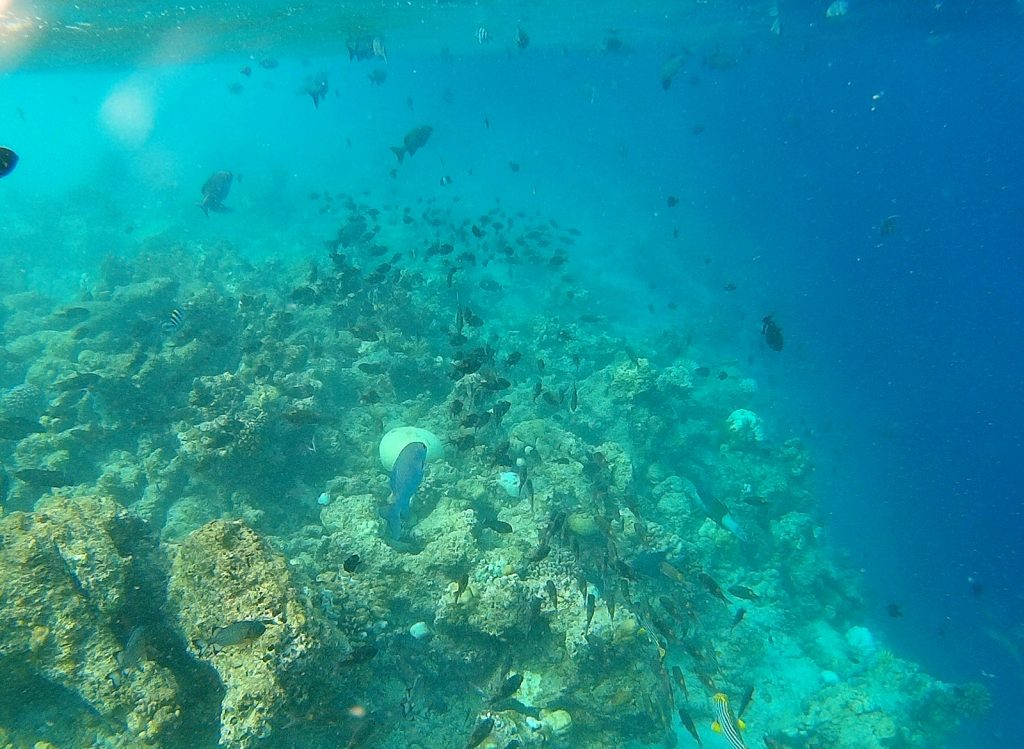 guide-to-budget-maldives-reef
