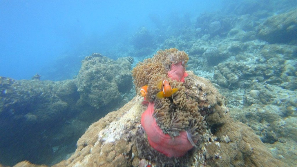 islandii-ukulhas-corals-1