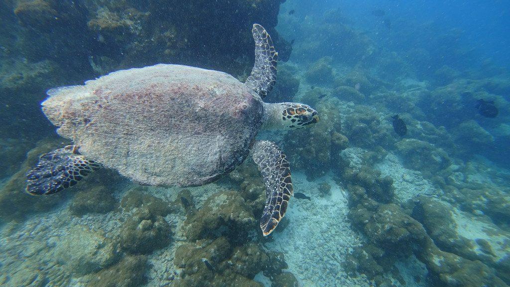 islandii-ukulhas-turtle