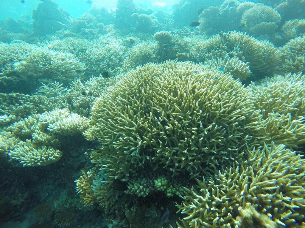 omadhoo-snorkeling-1