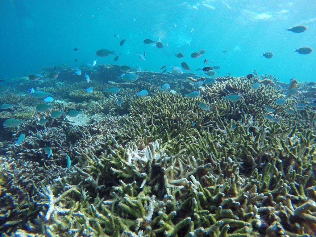 omadhoo-snorkeling