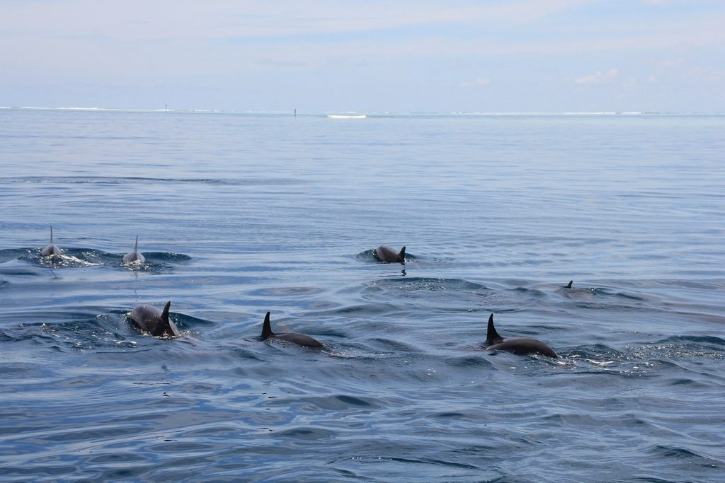 rasdhoo-dolphins-2