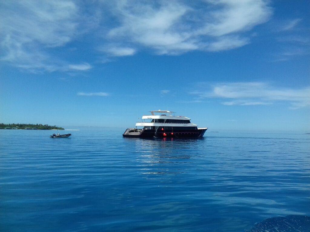 azalea-cruise