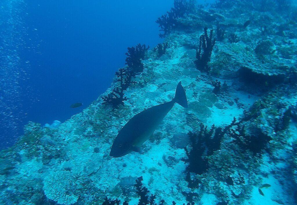 azalea-cruise-fish