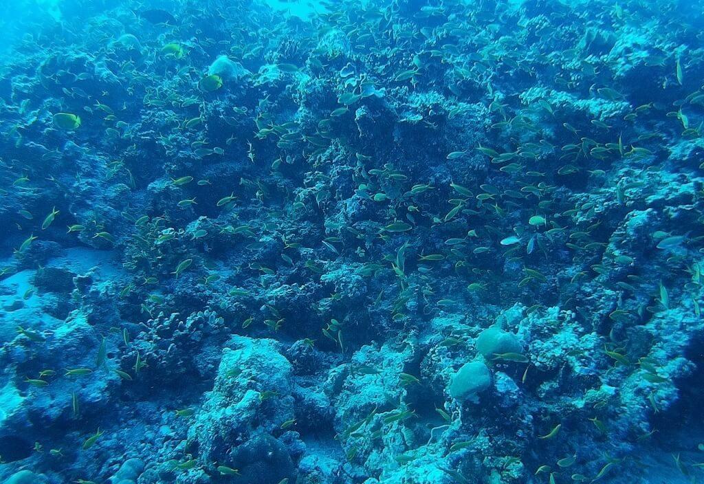 azalea-cruise-fishes