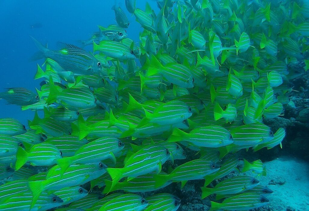 azalea-cruise-school-of-fishes