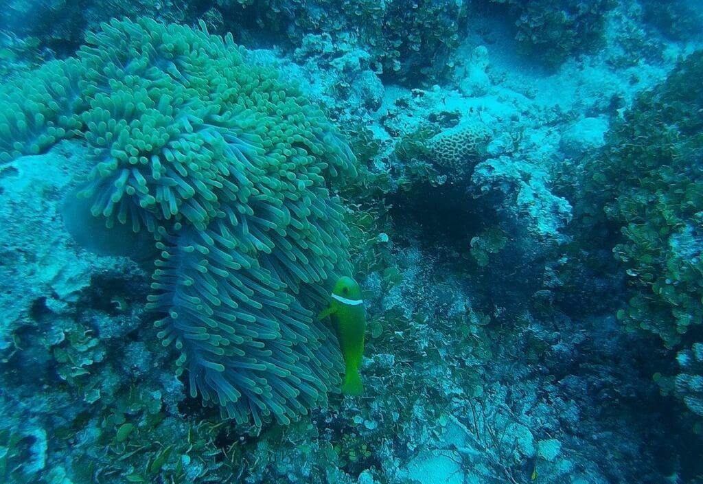 azalea-cruise-soft-corals
