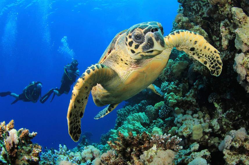 scubaspa-turtle