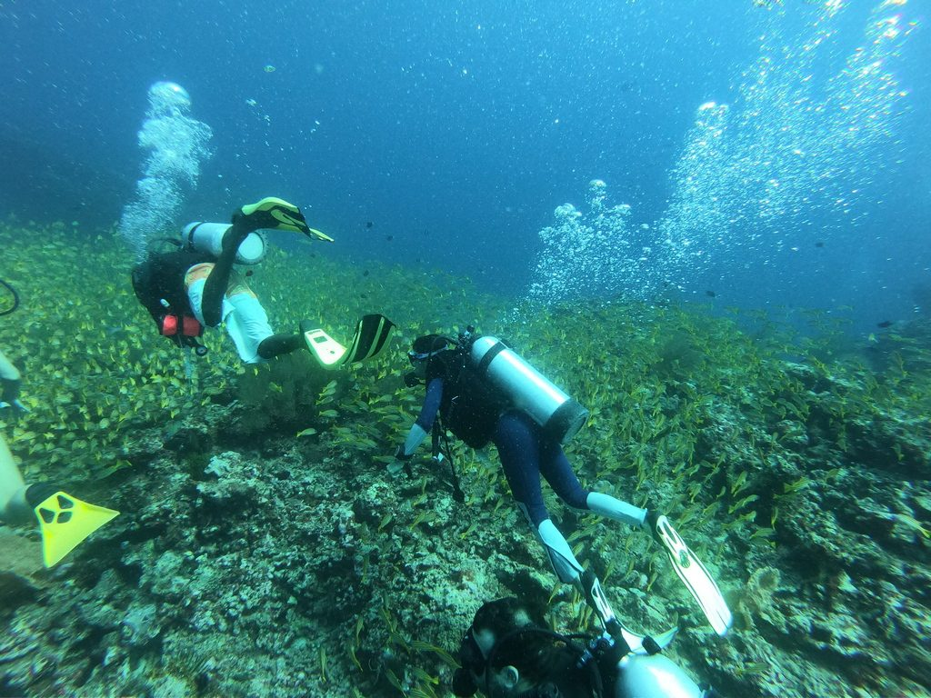 dhangethi diving divers
