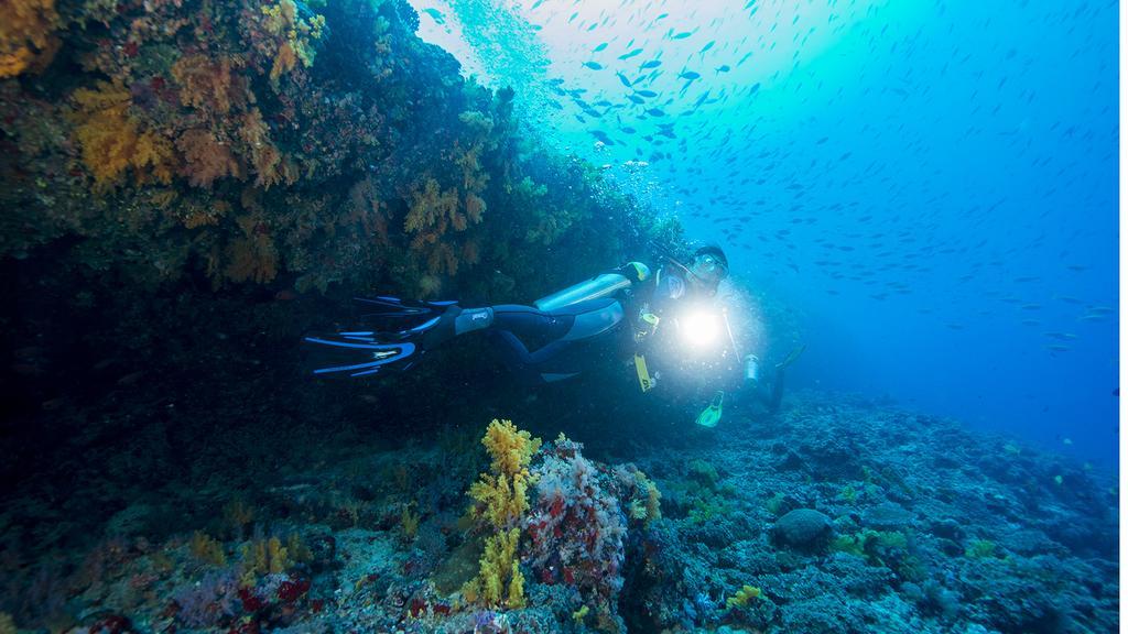 Hanimaadhoo-diving