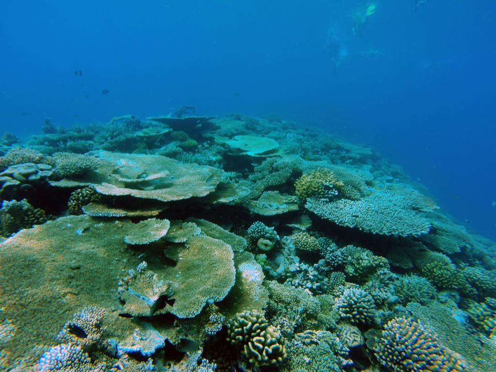 dharavandhoo snorkeling
