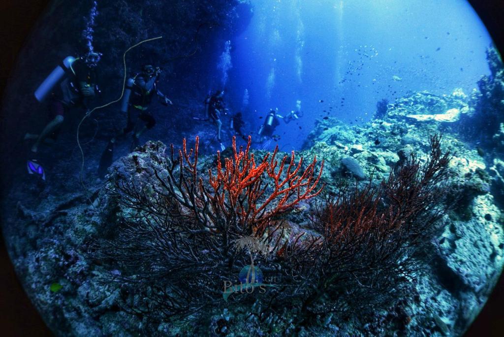 himmafushi diving
