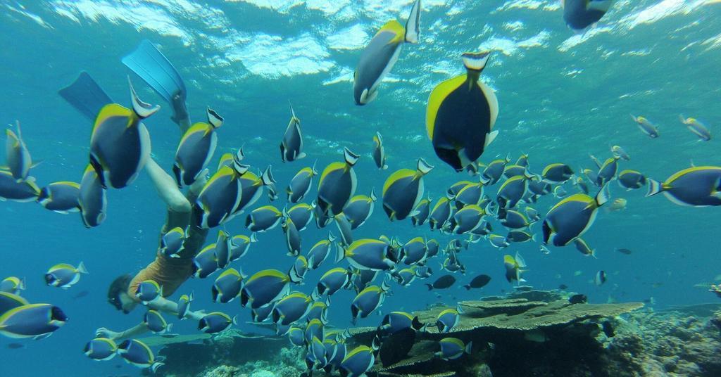himmafushi snorkeling