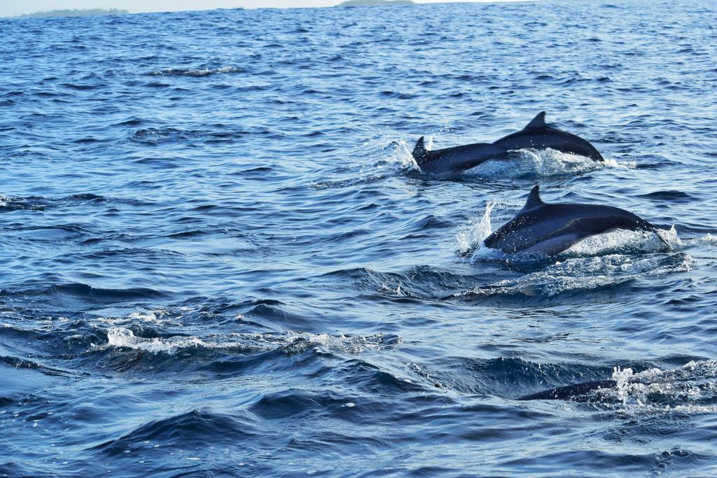 huraa dolphins