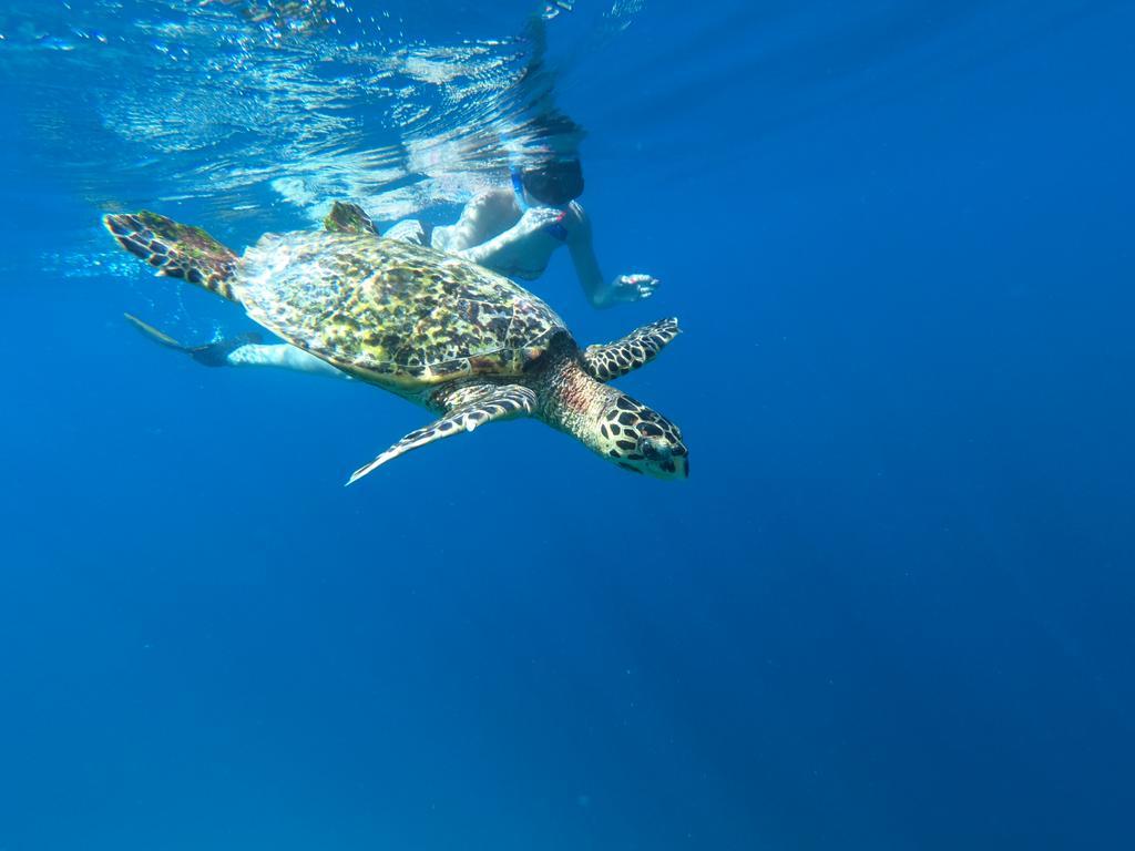 huraa snorkeling